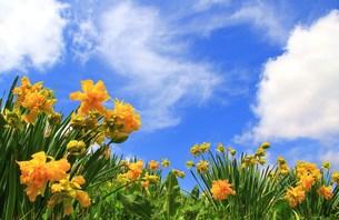 黄色い花の写真素材 [FYI00153324]