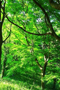 新緑の写真素材 [FYI00153342]