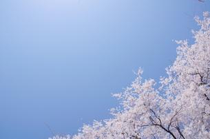 桜空の写真素材 [FYI00153547]