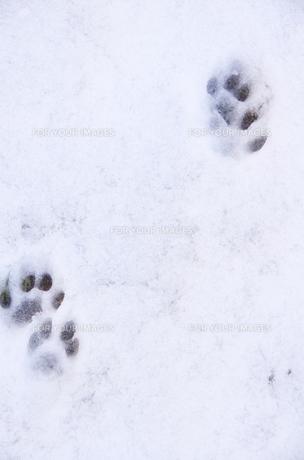 雪の足あとの写真素材 [FYI00153563]
