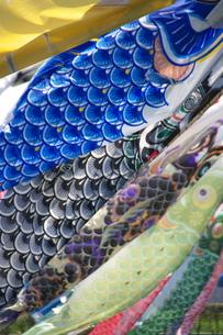 風にたなびく館林市の鯉のぼりの写真素材 [FYI00153685]