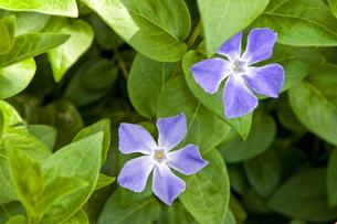 野の花の写真素材 [FYI00153828]