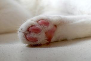 ネコの肉球の写真素材 [FYI00153933]
