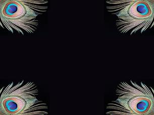 カラフルな孔雀の羽の写真素材 [FYI00154005]