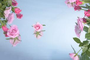 ビュティー薔薇の香りの写真素材 [FYI00154015]