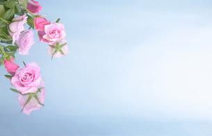 エステ薔薇の香りの写真素材 [FYI00154021]
