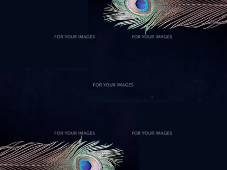 カラフルな孔雀の羽の写真素材 [FYI00154023]