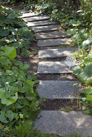 屋上庭園の写真素材 [FYI00154027]