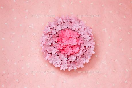 丸い桜の写真素材 [FYI00154029]