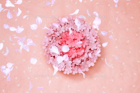 丸い桜の写真素材 [FYI00154044]