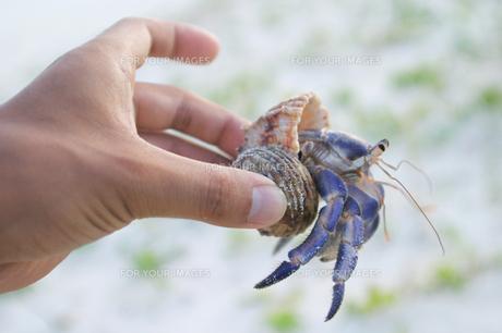 砂浜のヤドカリの写真素材 [FYI00154066]