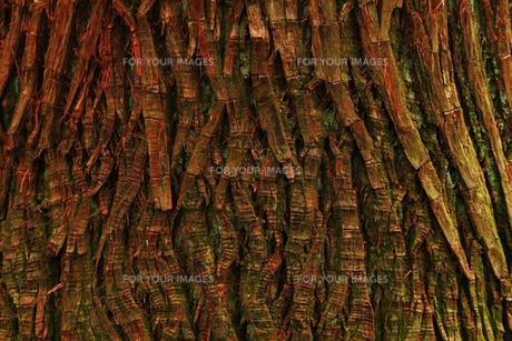 テクスチャ、木の素材 [FYI00154112]
