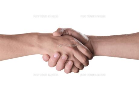 握手をする男性の手の素材 [FYI00154116]