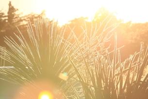 朝日の逆光の写真素材 [FYI00154120]