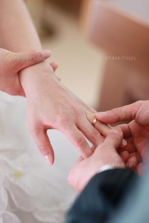 指輪交換の写真素材 [FYI00154125]