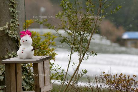 雪だるまの写真素材 [FYI00154220]