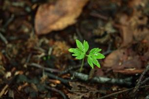 森の中の新芽の写真素材 [FYI00154529]