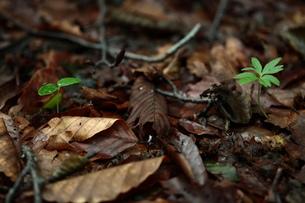 森の中の新芽の写真素材 [FYI00154539]