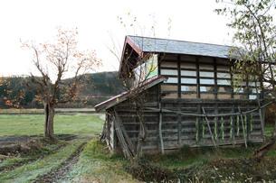 小屋とダイコン干し(葉)の写真素材 [FYI00155113]