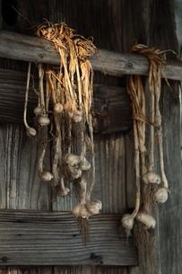 ニンニク玉と小屋の写真素材 [FYI00155642]