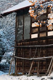 小屋と柿の木と初雪の写真素材 [FYI00155644]