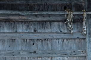 小屋とニンニク玉の写真素材 [FYI00155645]