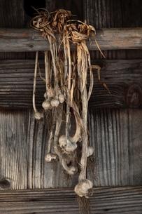 ニンニク玉と小屋の写真素材 [FYI00155646]