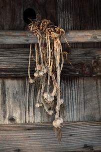 ニンニク玉と小屋の写真素材 [FYI00155648]