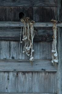 小屋とニンニク玉の写真素材 [FYI00155661]