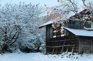 小屋と柿の木と初雪の写真素材 [FYI00155663]