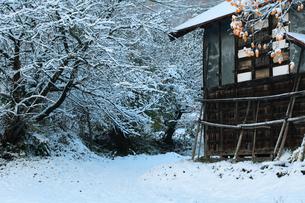 小屋と柿の木と初雪の写真素材 [FYI00155664]