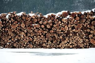 杉の丸太積みと雪の写真素材 [FYI00155680]