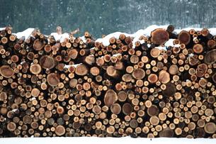 杉の丸太積みと雪の写真素材 [FYI00155694]