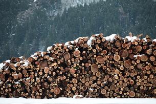 杉の丸太積みと雪の写真素材 [FYI00155695]