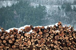 杉の丸太積みと雪の写真素材 [FYI00155711]