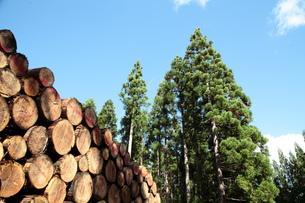 杉の丸太の写真素材 [FYI00155843]
