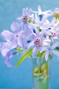 少しイラスト加工した青い花の写真素材 [FYI00155918]