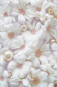 花とパールの写真素材 [FYI00155920]