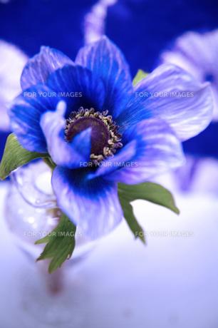 和風柄と青いアネモネの写真素材 [FYI00155973]
