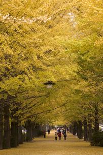 いちょう並木・秋の写真素材 [FYI00156055]