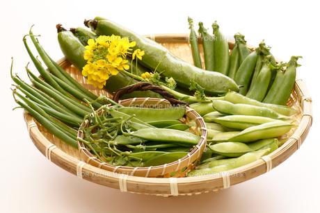 春の豆の写真素材 [FYI00156129]