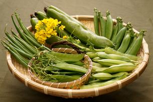 春の豆の写真素材 [FYI00156151]