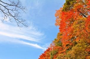 養老渓谷の紅葉と秋の空と雲のコントラストの写真素材 [FYI00156179]