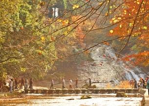 養老渓谷 粟又の滝の紅葉の写真素材 [FYI00156180]