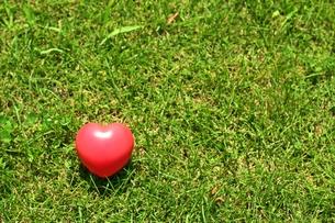 芝生の上にハートがポツリの写真素材 [FYI00156200]
