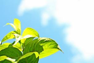 成長するグリーンの写真素材 [FYI00156203]