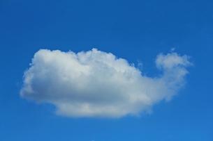 くじらの形をした雲の写真素材 [FYI00156208]