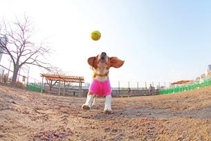 ボール遊びの写真素材 [FYI00156229]