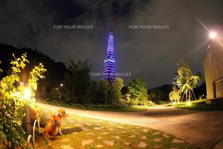 東京ウォームライト〜東京タワー夜景1の写真素材 [FYI00156233]