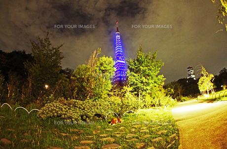 東京ウォームライト〜東京タワー夜景2の写真素材 [FYI00156246]